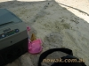 Australijska leniwa niedziela Nowaków na plaży w Jacobs Well