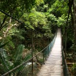 Australijskie lasy deszczowe.