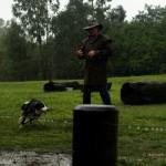 Australia – owce, psy pasterskie i Agnieszka Perepeczko