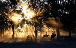 praca w australii na farmie konie jadą przez las
